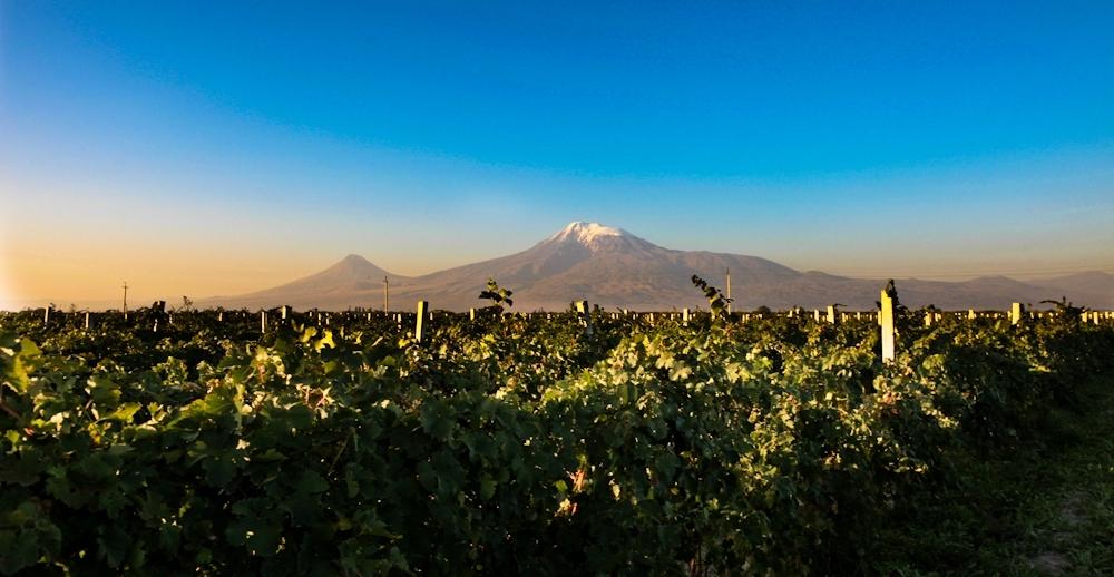 Символ Армении - Виноград