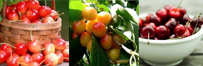 армянские фрукты - черешня